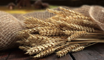 Perché abbiamo abbandonato le farine convenzionali